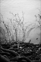 Roots of Reflections by aponom