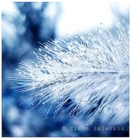 silver dew drops by ftourini