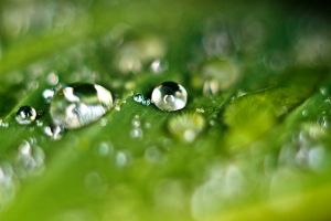 Waterdrops on a leaf VII by luka567
