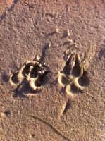 - Paws on the beach - by wolf-child1995