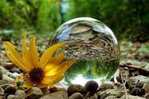 sunflower and crystal ball by April-Mo
