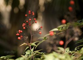 Berries by dylan-S