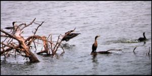 Cold Water and Cormorants by SuicideBySafetyPin