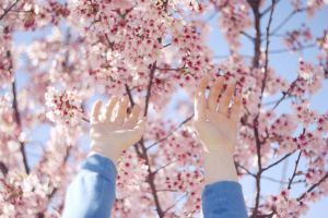 hands and blossoms by juliaschmidt