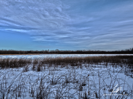 Down At The Frozen Marsh HDR by Sybaristail