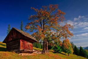 Old hut Bukovina by lica20