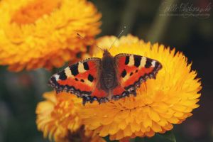 Winged Creature by Estelle-Photographie
