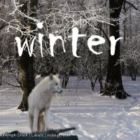 winter wolf manipulation for howrse by xXRedRidingHoodXx