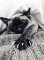 lazybones by pauart