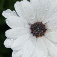 Waterdrops by Angelosjay
