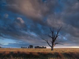 The Lone Tree by FireflyPhotosAust