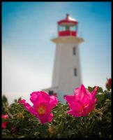 Flowers and a Lighthouse by mikewhobikes
