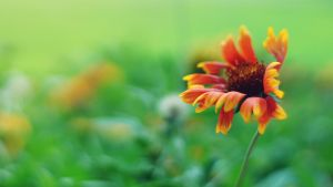 Swaying in the breeze by praveen3d