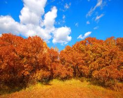 Autumn Brush on a Blue Sky by greenunderground