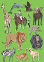 The Mammal book Illustrations by ll
