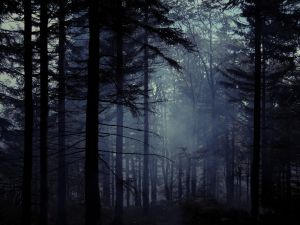 Old misty forest III by Topielica666