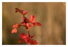 red autumn by one-shot-below