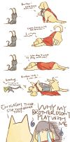 dog THOR cat LOKI by NsosDA