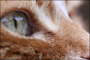 Eye of the Hunter by cursedsight
