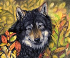 .:autumn Wolf:. by SaidyWolf