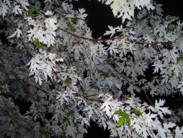 White Tree Leaves by AnchoredWithADragon