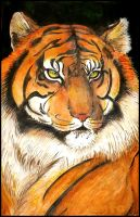 Sumatran tiger by Triumfa
