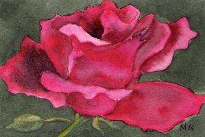A ROSE IS A ROSE by aladyx