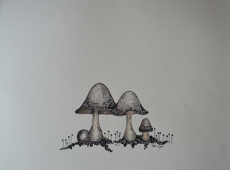 Dotted fungi by HydraID