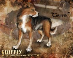Griffin - World War One Messenger Dog by WolfScribe