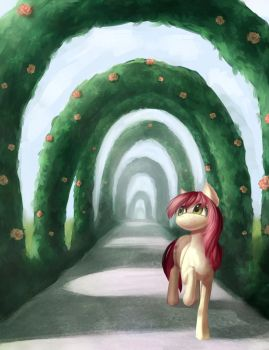 Rose by Shedence