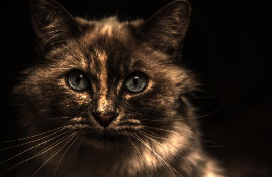 Cat Face by JNCR