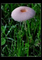 Raindrops and Toadstools by Forestina-Fotos