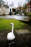 Swan and city by annamarcella24