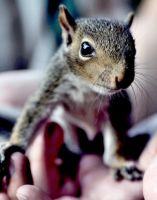 Baby Squirrel 2-redited by SilentDistractions
