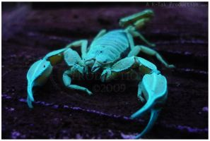 UV Scorpion by K-Tak