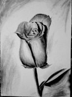 Rose by Artrotter