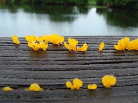 witches butter by Designdivala