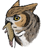 Great Horned Owl by MizfitOwl