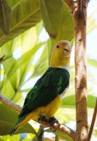 Green and Yellow Parrot by AnxietyPatient