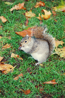 Little Squirrel by Ana-D