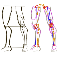 GS01- Leg structure by retinence