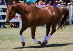 STOCK - Equitana 2013-448 by fillyrox