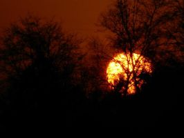 The Sun Setting Behind Trees by gdsbngd2me