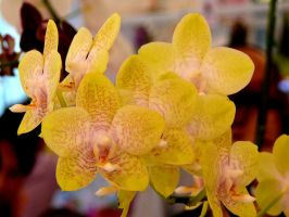 Orchid21 by Otoff