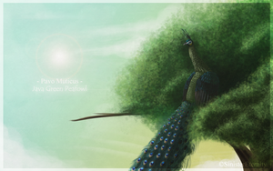 ++ Pavo Muticus ++ by SinisterEternity