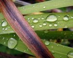 magnifyingdewdrops by rpete38