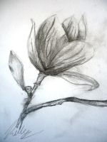 Quick Flower Sketch by ikelly77