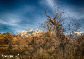 Snowless Meadow HDR by mjohanson