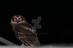 Owl by spookyt5