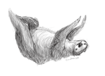 Day 28- Two-toed Sloth (Choloepus didactylus) by Cloudwilk